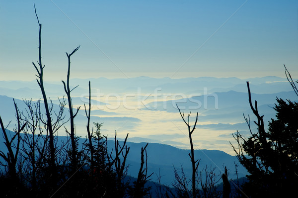 Morning Fog, Smoky Mountains Stock photo © tmainiero