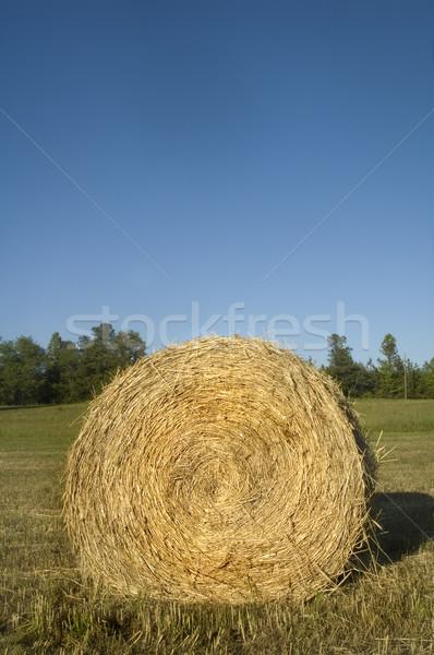 Siano bela toczyć trawy słońce zielone Zdjęcia stock © tmainiero
