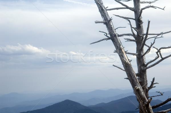 Mavi dağlar manzara ölü ağaç asit Stok fotoğraf © tmainiero