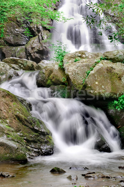 Spruce Flats Falls waterfall in smoky mountains Stock photo © tmainiero