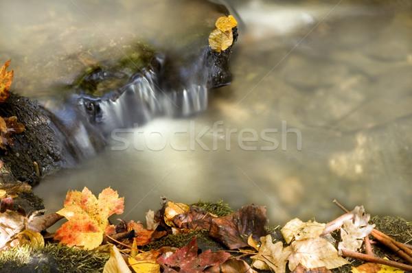 Sonbahar çağlayan bo orman yaprak arka plan Stok fotoğraf © tmainiero