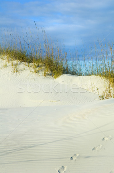 Footsteps in sand Stock photo © tmainiero