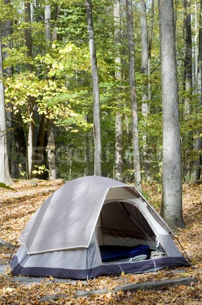 çadır kamp orman doğa ağaçlar eğlence Stok fotoğraf © tmainiero