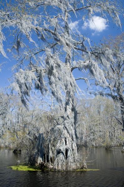 İspanyolca yosun ağaç bataklık su Stok fotoğraf © tmainiero
