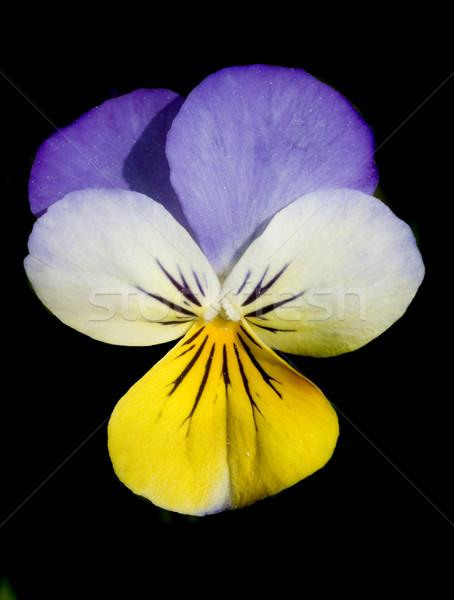 Fleur heureux nature fond été Photo stock © tmainiero