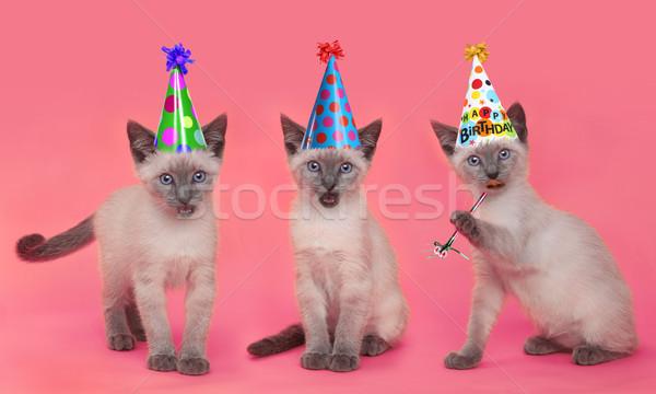 котят рождения розовый празднования Сток-фото © tobkatrina