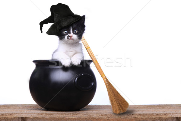 Aanbiddelijk kitten halloween heksenhoed bezem cute Stockfoto © tobkatrina