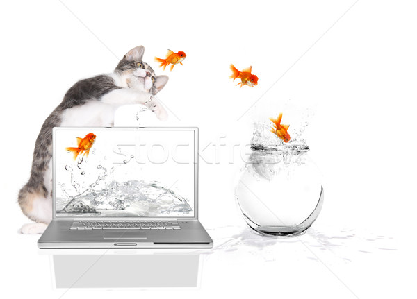 Kitty Pawing at Goldfish Flying Out of Water Stock photo © tobkatrina