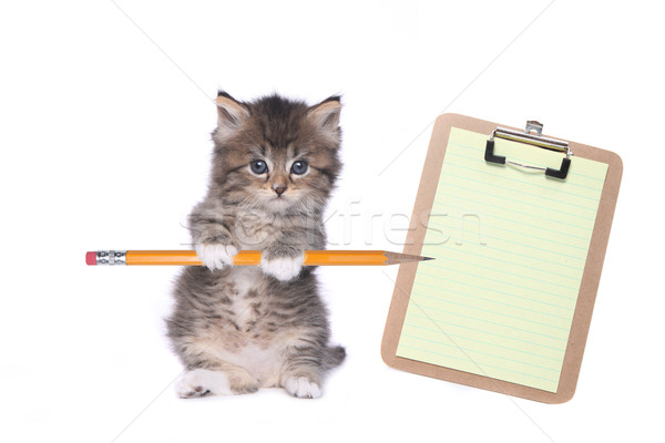 Cute Kitten Holding Pencil With Blank Clipboard Stock photo © tobkatrina