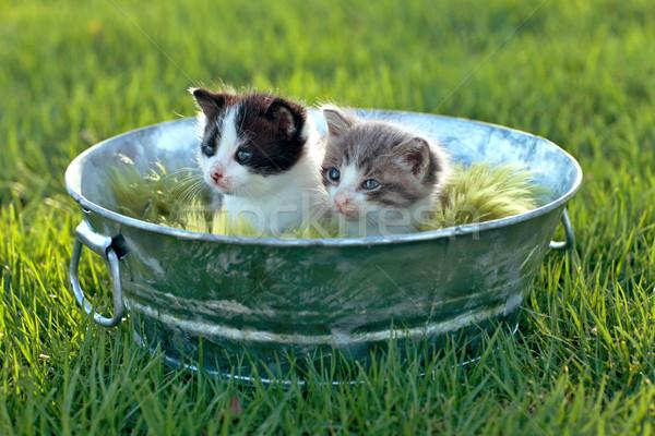 Gattini esterna la luce naturale cute piccolo verde Foto d'archivio © tobkatrina