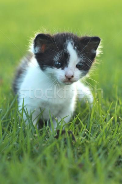 赤ちゃん 子猫 屋外 草 愛らしい 緑 ストックフォト © tobkatrina