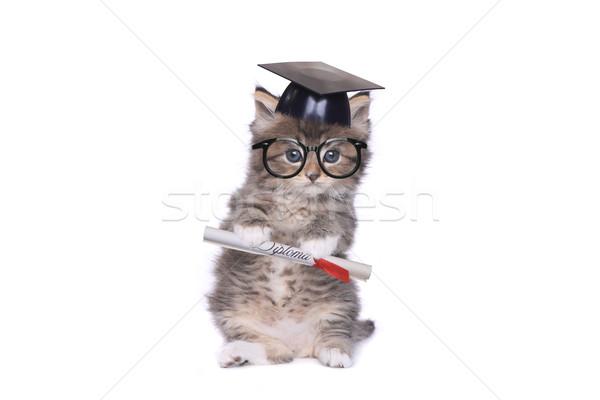 Kitten Graduating With Diploma Stock photo © tobkatrina