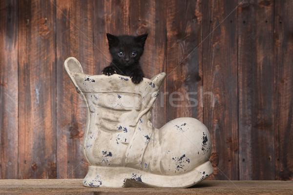 愛らしい 子猫 古い ブート 靴 木材 ストックフォト © tobkatrina