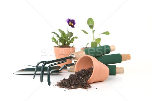 園芸用具 白 複数 春 自然 葉 ストックフォト © tobkatrina