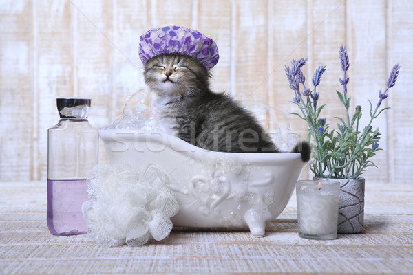 Imádnivaló kiscica fürdőkád megnyugtató vicces szeretet Stock fotó © tobkatrina