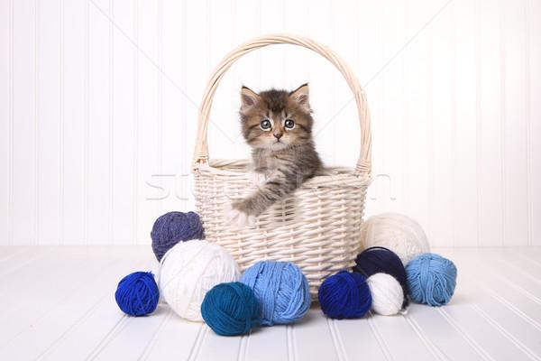 Cute kitten mand garen witte weinig Stockfoto © tobkatrina