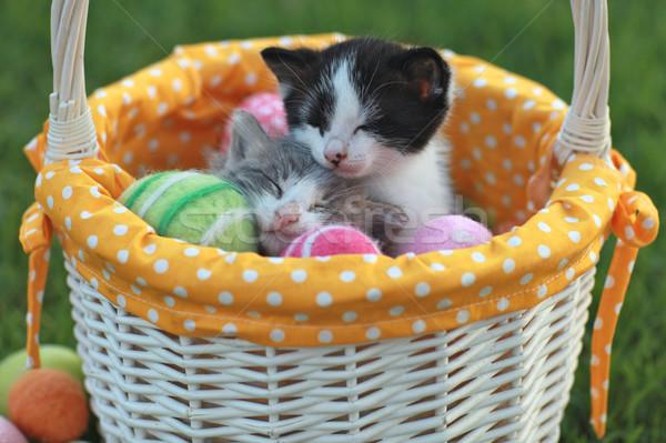 Imádnivaló kiscicák ünnep húsvét kosár tojások Stock fotó © tobkatrina