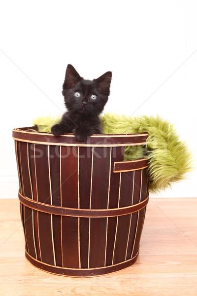 好奇心の強い かわいい 子猫 バスケット 白 ストックフォト © tobkatrina