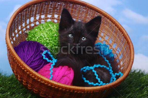Aanbiddelijk kitten geval garen baby kat Stockfoto © tobkatrina