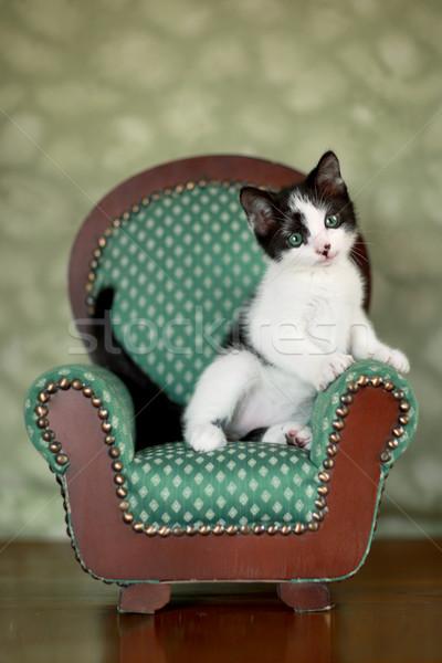 子猫 座って 椅子 かわいい 極端な ストックフォト © tobkatrina