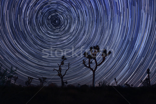 Estrela leitoso maneira árvore parque natureza Foto stock © tobkatrina