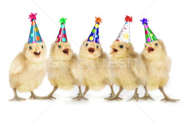Yellow Baby Chicks Singing Happy Birthday Stock photo © tobkatrina