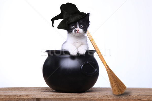 Adorabile gattino halloween cappello da strega ginestra cute Foto d'archivio © tobkatrina