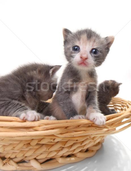かわいい 赤ちゃん 子猫 孤立した 白 ストックフォト © tobkatrina