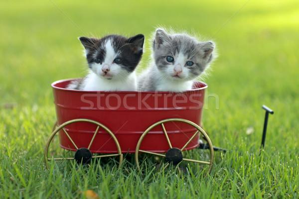 Kocięta odkryty naturalne światło cute mały zielone Zdjęcia stock © tobkatrina