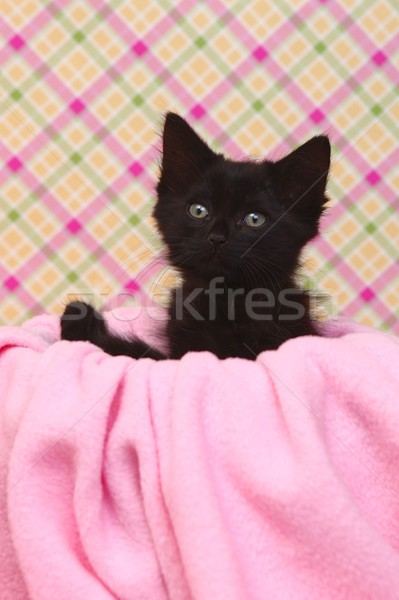 Curious Kitten on a Pink Soft Background Stock photo © tobkatrina