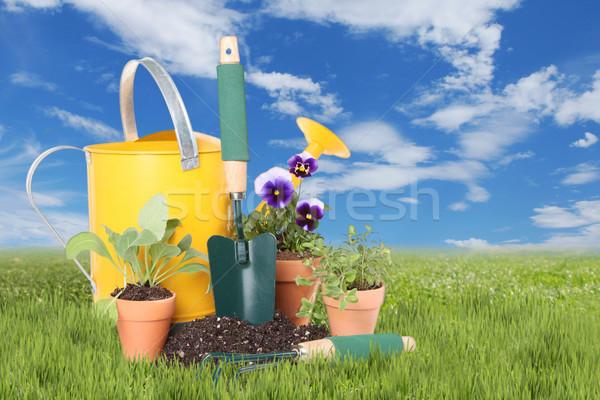 花 ハーブ 春 時間 新しい ストックフォト © tobkatrina