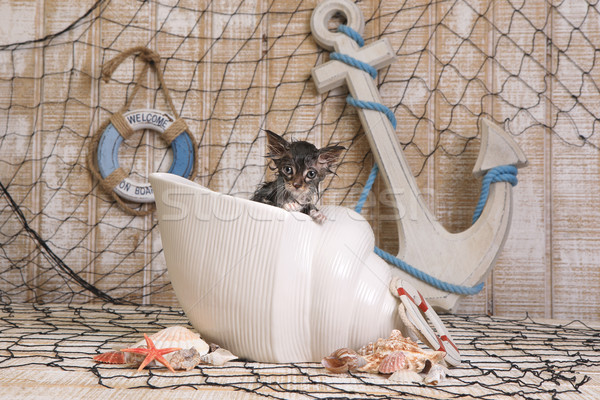 Dripping Wet Kitten on Ocean Themed Background Stock photo © tobkatrina