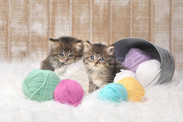 子猫 糸 スタジオ 愛らしい 愛 ストックフォト © tobkatrina