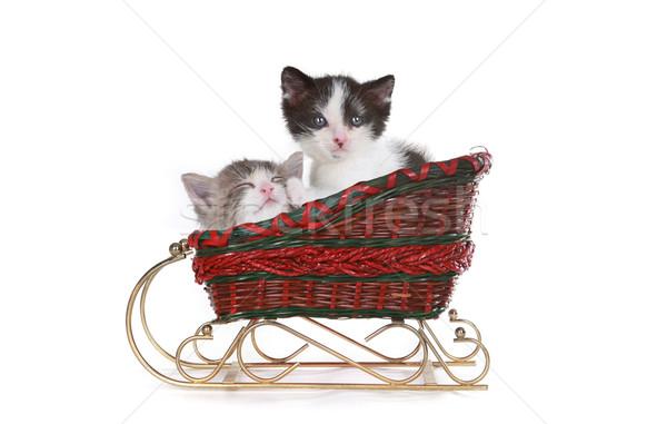 ストックフォト: 子猫 · サンタクロース · クリスマス · そり · かわいい · 白
