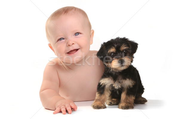 Adorable Baby Boy With His Pet Teacup Yorkie Puppy Stock photo © tobkatrina