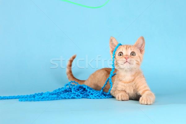Little Orange Tabby Kitten in Studio Stock photo © tobkatrina