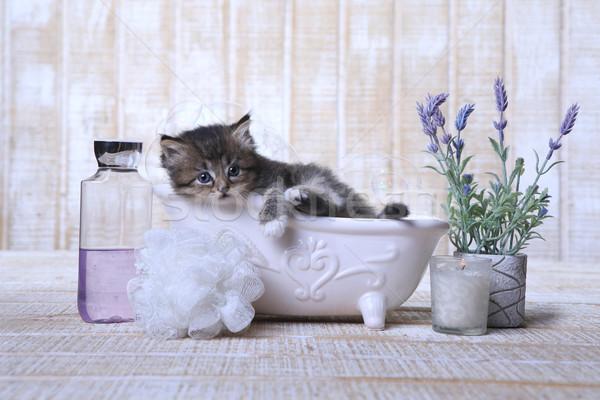 Adorable Kitten in A Bathtub Relaxing Stock photo © tobkatrina