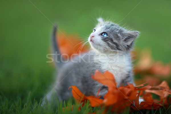 赤ちゃん 子猫 演奏 屋外 草 かわいい ストックフォト © tobkatrina