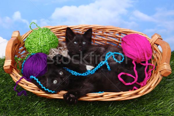 Amoroso juguetón gatitos cesta hilados cute Foto stock © tobkatrina