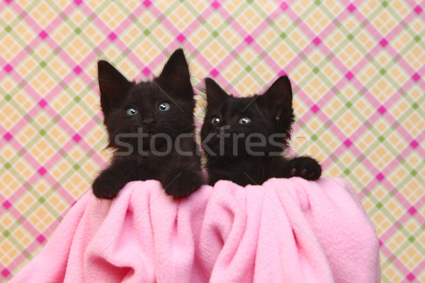 Cute Black Kittens on Pink Pretty Background Stock photo © tobkatrina