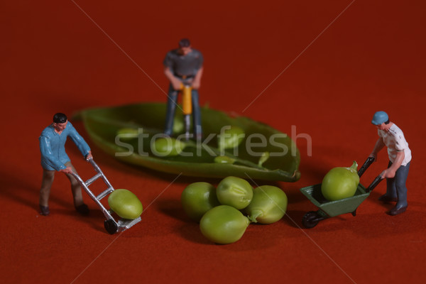 Construction Workers in Conceptual Food Imagery With Snap Peas Stock photo © tobkatrina