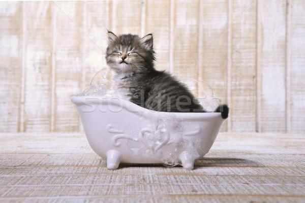 かわいい 愛らしい 子猫 バスタブ リラックス 面白い ストックフォト © tobkatrina