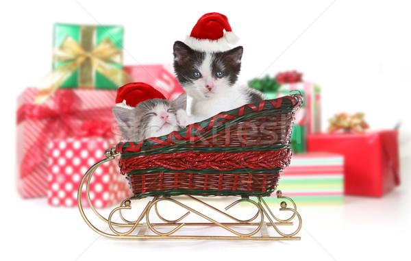 ストックフォト: かわいい · 子猫 · クリスマス · サンタクロース · そり · 贈り物