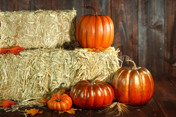 Fall Themed Scene With Pumpkins on Wood  Stock photo © tobkatrina