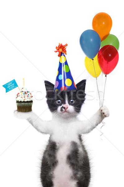 かわいい 子猫 お誕生日おめでとうございます 面白い 猫 歳の誕生日 ストックフォト © tobkatrina