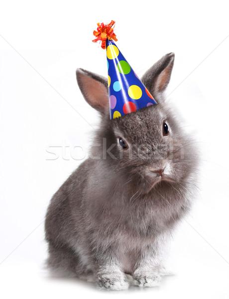 Arrabbiato peloso grigio coniglio compleanno Hat Foto d'archivio © tobkatrina