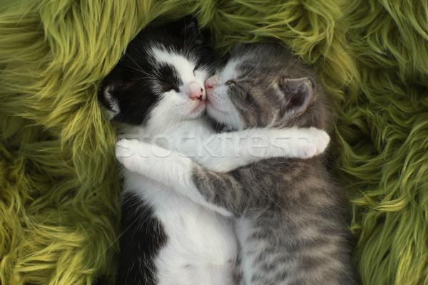 Gattini esterna la luce naturale cute piccolo amore Foto d'archivio © tobkatrina