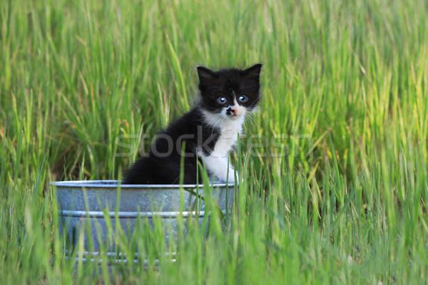 Gatinho ao ar livre verde alto grama Foto stock © tobkatrina
