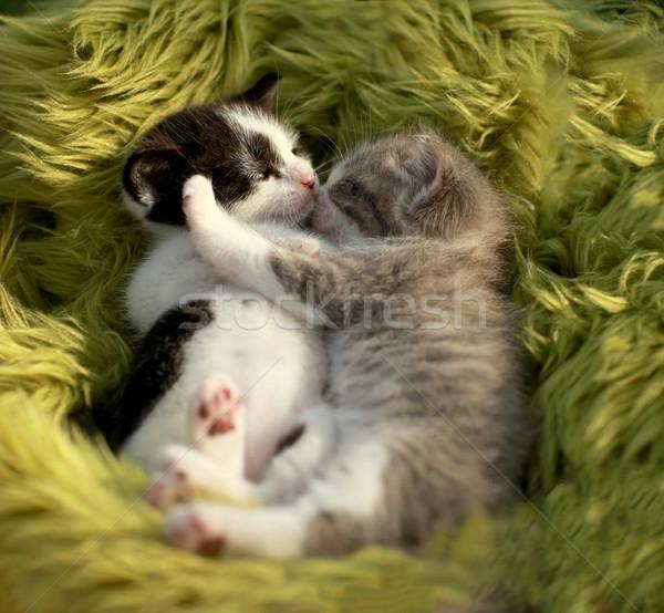 Knuffelen kittens buitenshuis natuurlijk licht weinig Stockfoto © tobkatrina