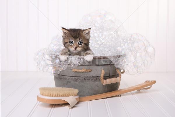 かわいい 子猫 泡風呂 赤ちゃん 猫 カレンダー ストックフォト © tobkatrina